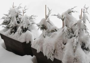 neige_hirondellina