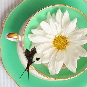 cup of tea hirondellina