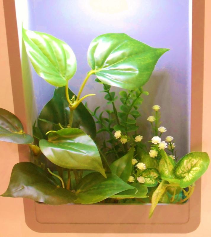 plante capteurs