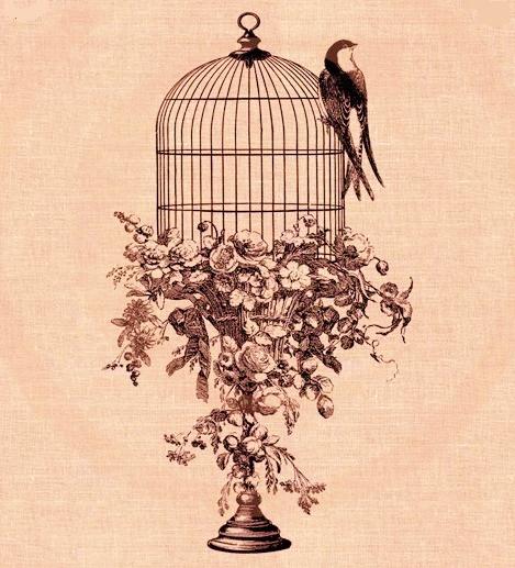 cage ouverte-hirondellina