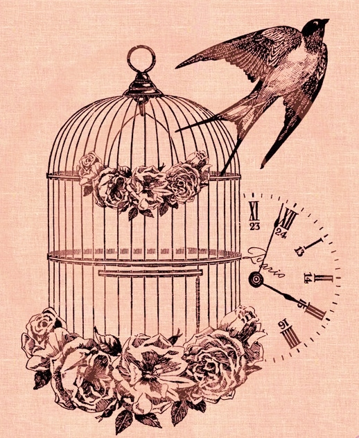 Oiseau hirondellina - Dessin oiseau en cage ...