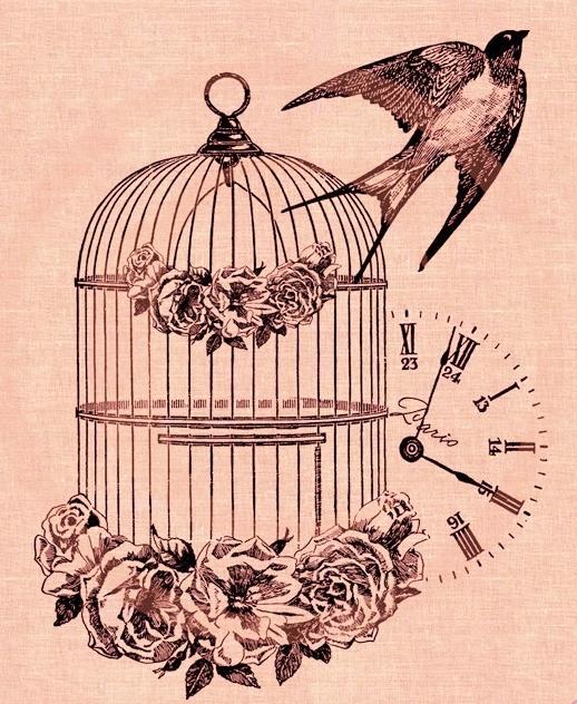 cage ouverte_hirondellina