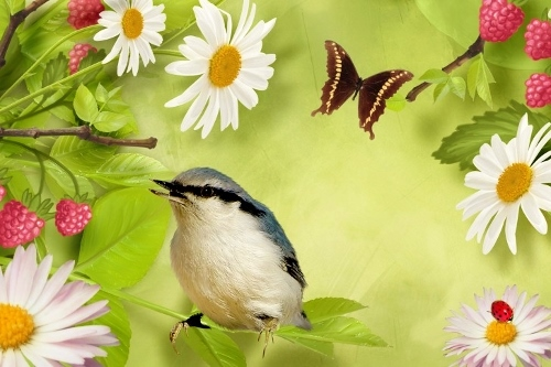 framboise et oiseau (500x333)