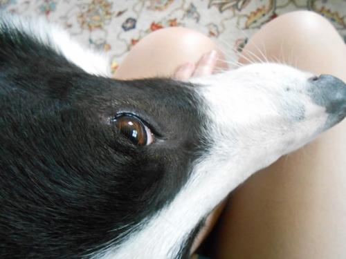 my dog (500x375)