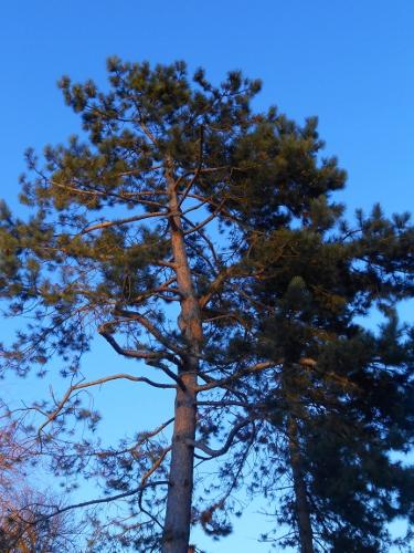 arbre hirondellina (375x500)