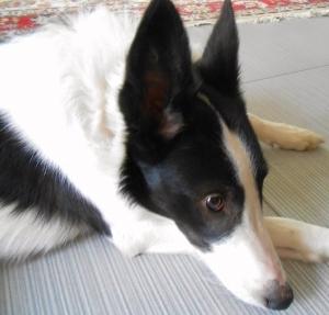 dog (300x287)
