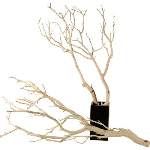 branches Manzanita (500x500)