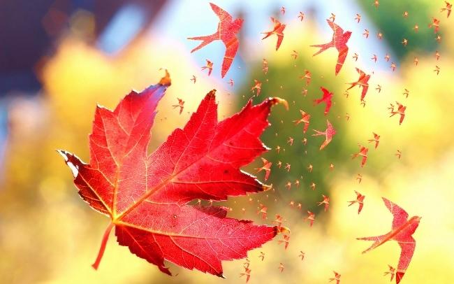 hirondelle automne (650x406)